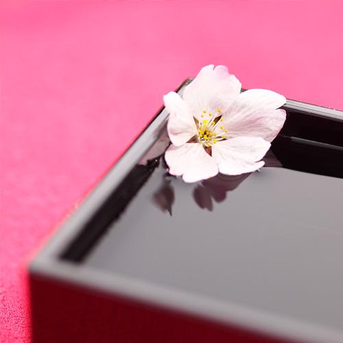 The cherry blossoms at Hirosaki Castle (Hirosaki Park)