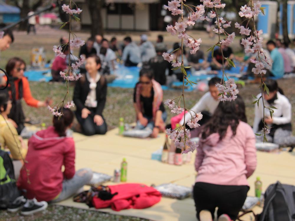 2015年 手ぶらで観桜会の様子