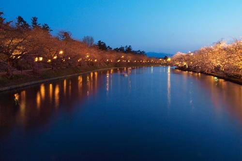 弘前公園西堀の夜桜
