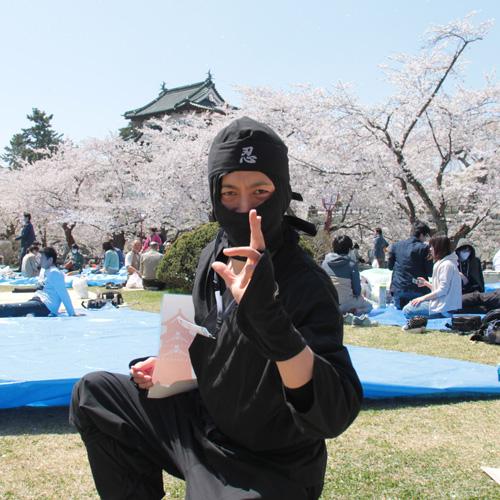 手ぶらで観桜会を案内する忍者