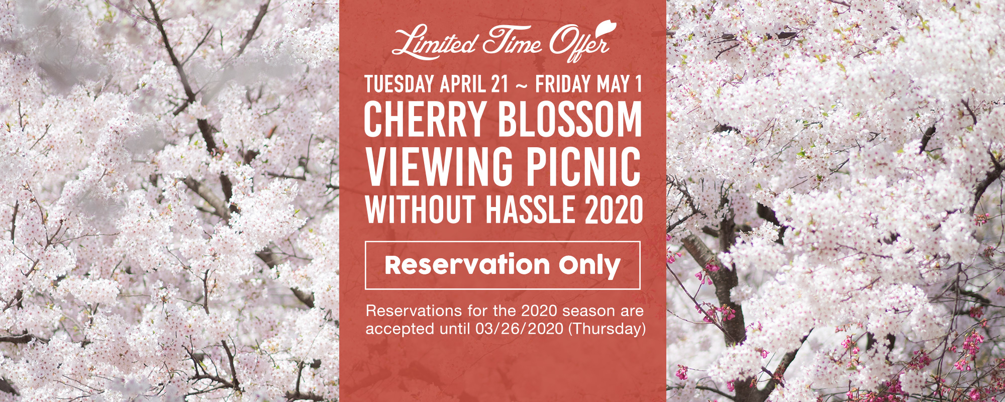 Tebura de Kanokai – Cherry Blossom Viewing Picnic without Hassle