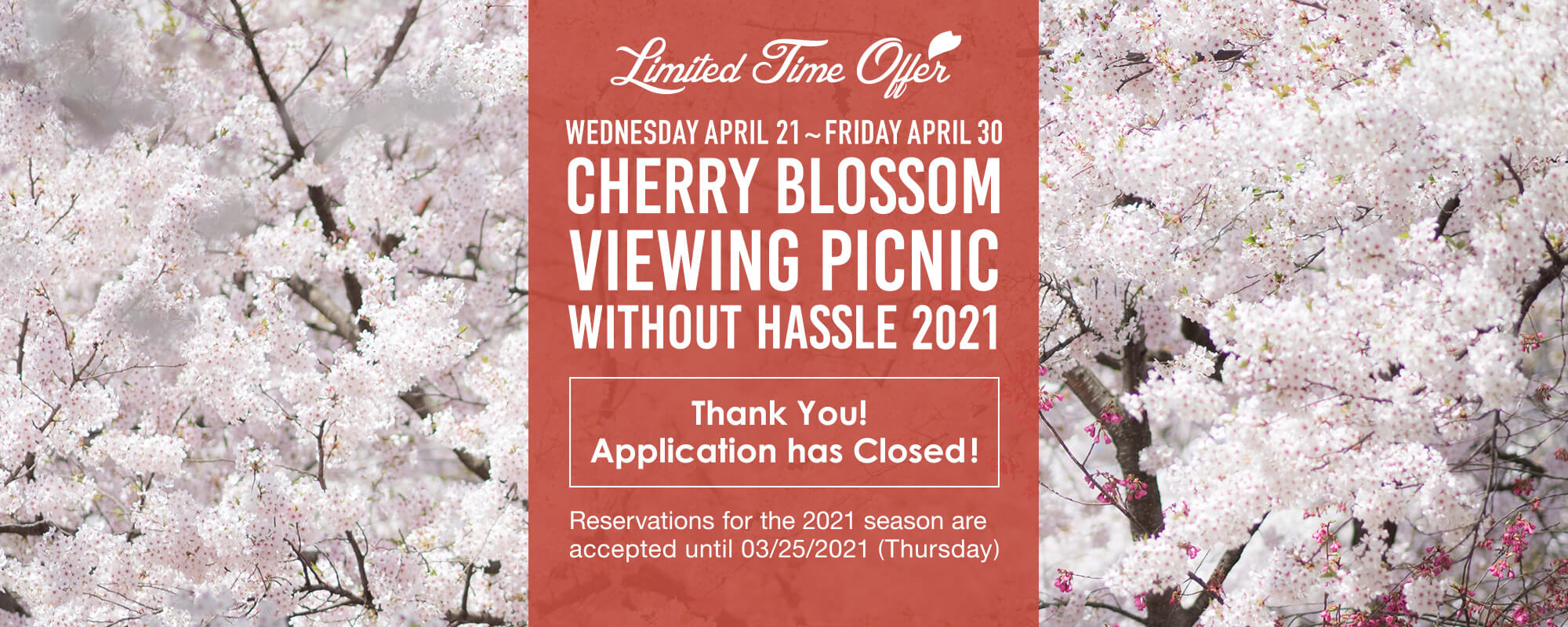 Tebura de Kanokai – Cherry Blossom Viewing Picnic without Hassle